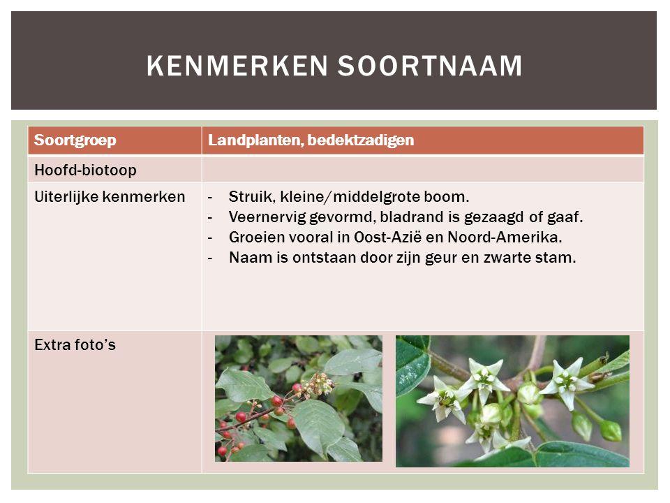 Kenmerken soortnaam Soortgroep Landplanten, bedektzadigen