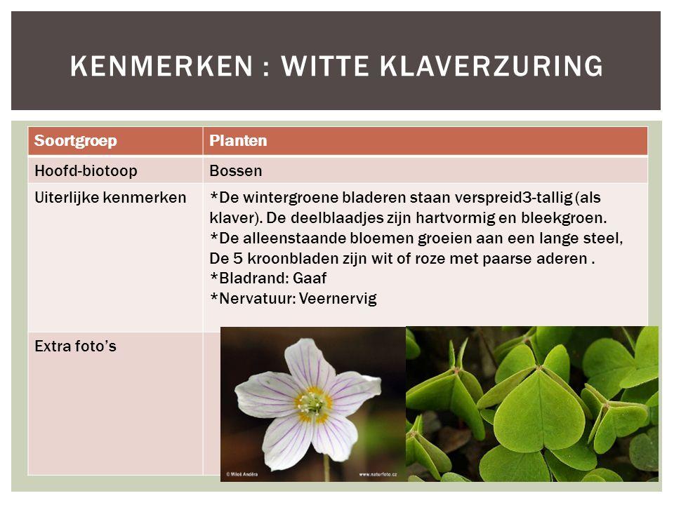 Kenmerken : Witte klaverzuring