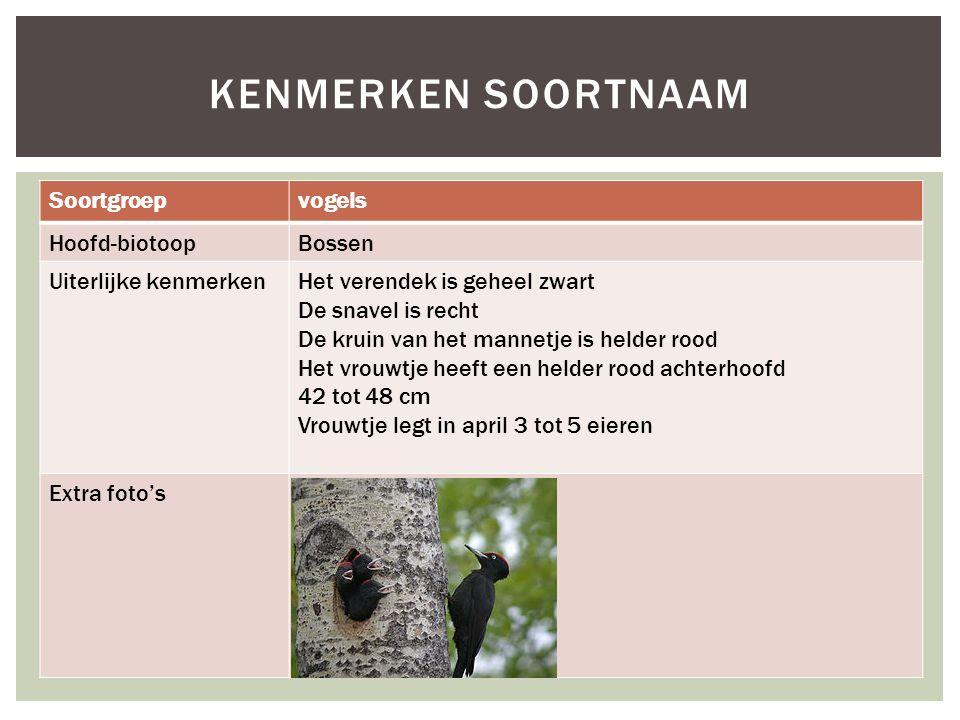 Kenmerken soortnaam Soortgroep vogels Hoofd-biotoop Bossen