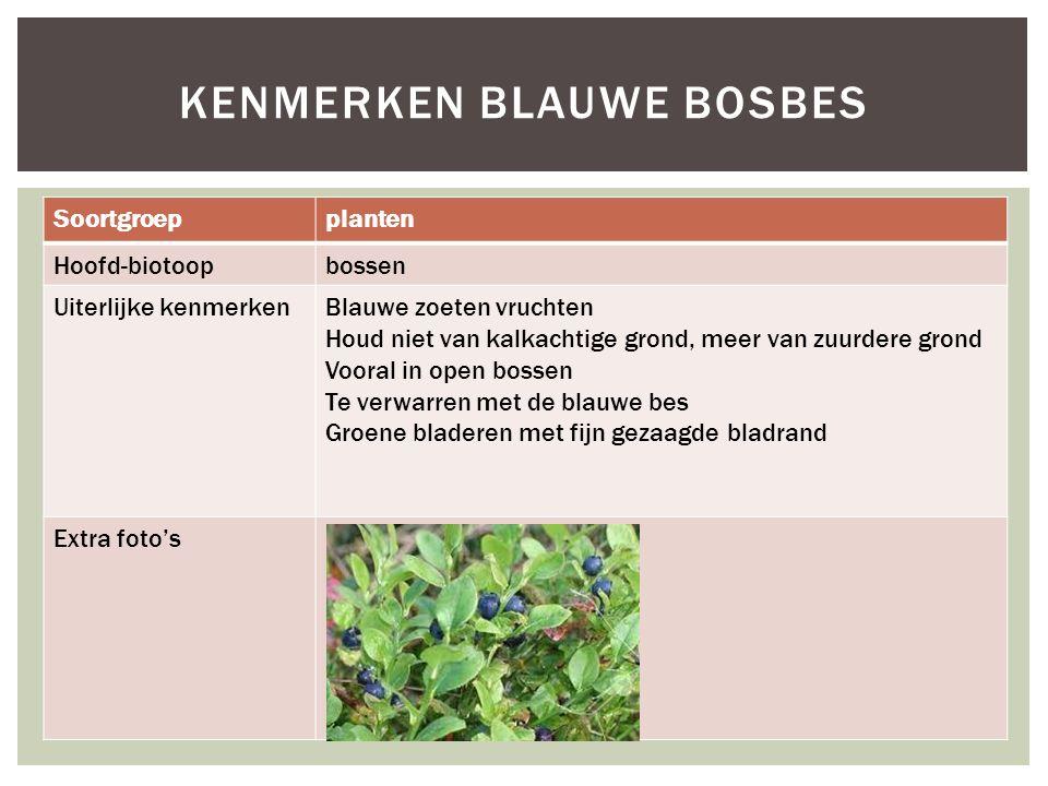 Kenmerken blauwe bosbes