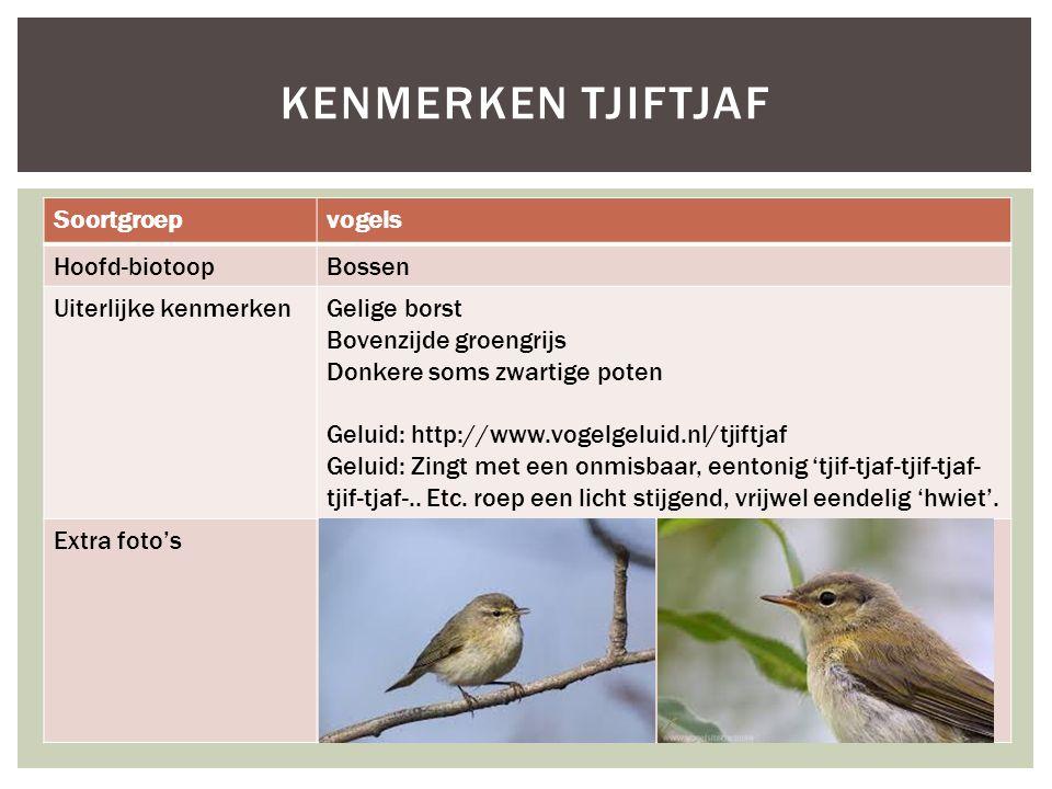 Kenmerken tjiftjaf Soortgroep vogels Hoofd-biotoop Bossen