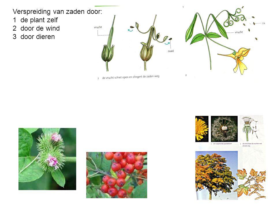 Verspreiding van zaden door: 1 de plant zelf 2 door de wind 3 door dieren