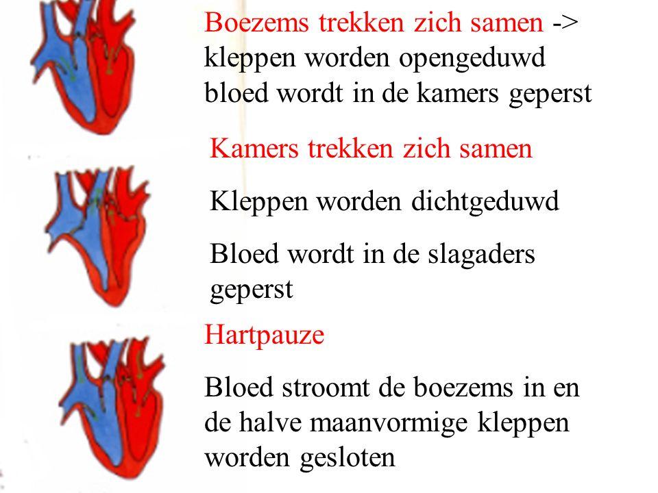 Boezems trekken zich samen -> kleppen worden opengeduwd bloed wordt in de kamers geperst