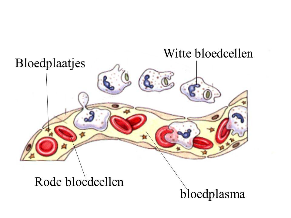 Witte bloedcellen Bloedplaatjes Rode bloedcellen bloedplasma