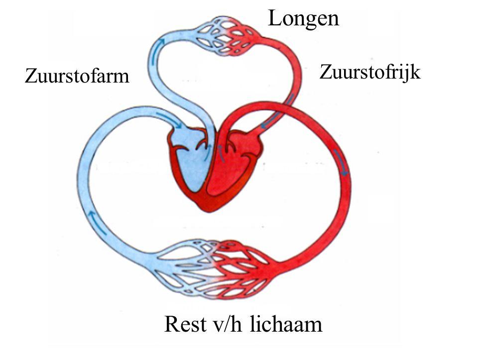 Longen Zuurstofrijk Zuurstofarm Rest v/h lichaam