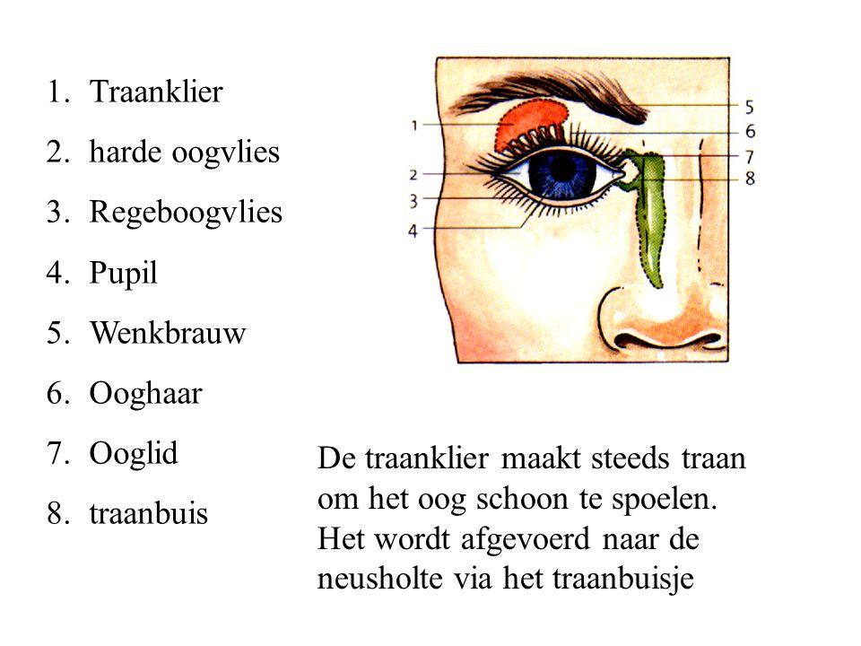 Traanklier harde oogvlies. Regeboogvlies. Pupil. Wenkbrauw. Ooghaar. Ooglid. traanbuis.