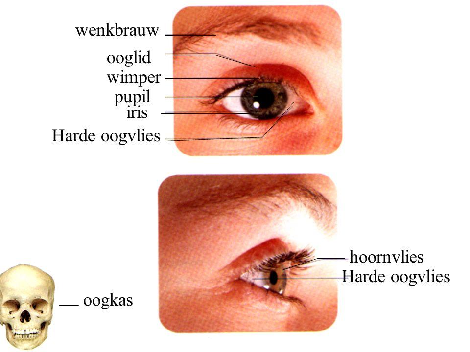 wenkbrauw ooglid wimper pupil iris Harde oogvlies hoornvlies Harde oogvlies oogkas