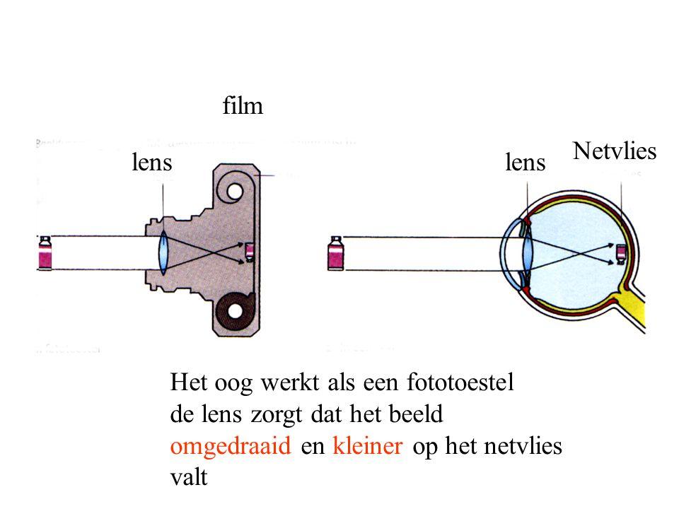film Netvlies. lens. lens.