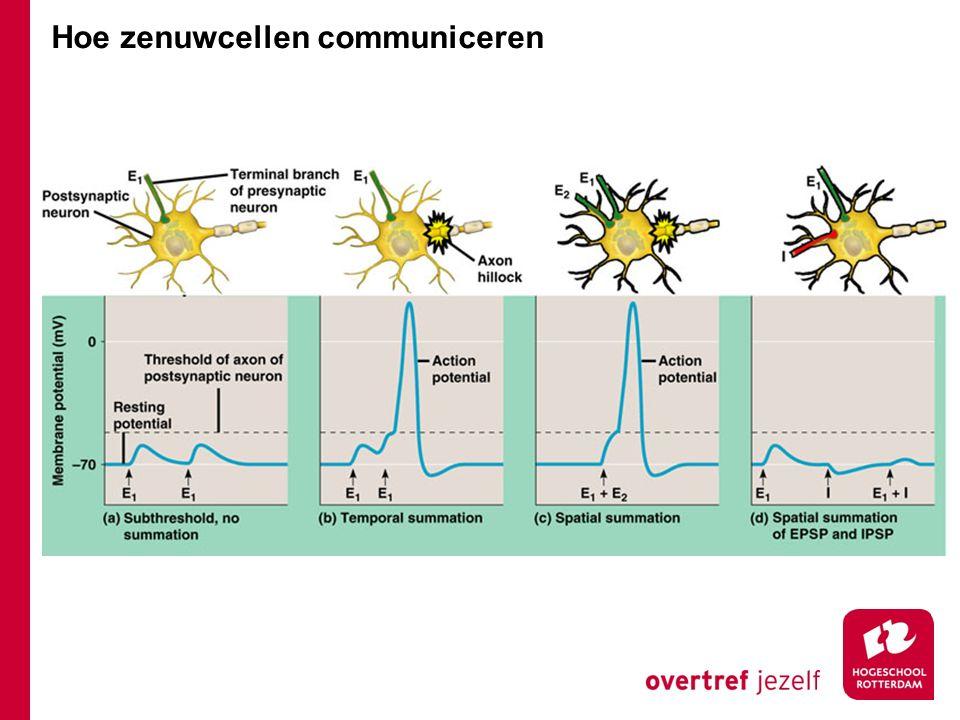 Hoe zenuwcellen communiceren