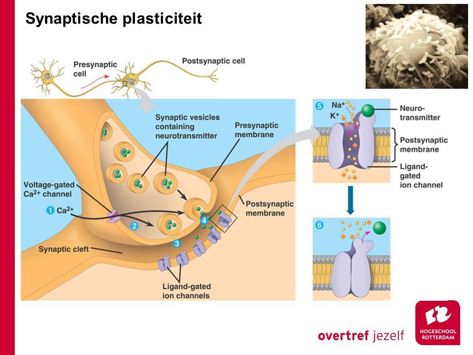 Synaptische plasticiteit