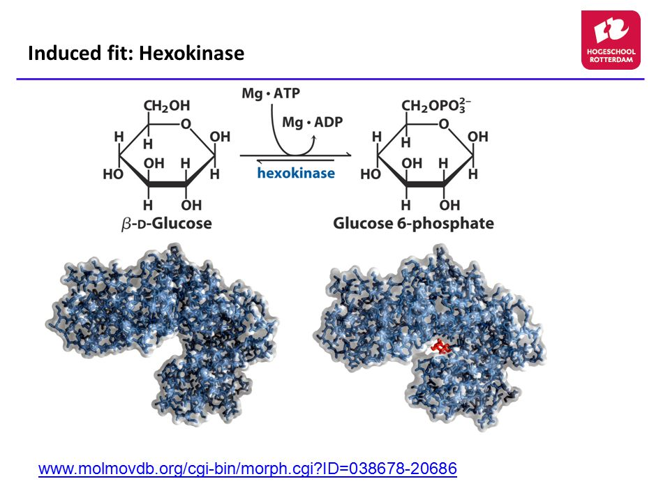 Induced fit: Hexokinase