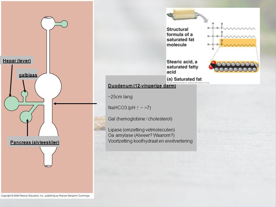 Hepar (lever) galblaas. Duodenum (12-vingerige darm) ~25cm lang. NaHCO3 (pH ↑ ~ >7) Gal (hemoglobine / cholesterol)