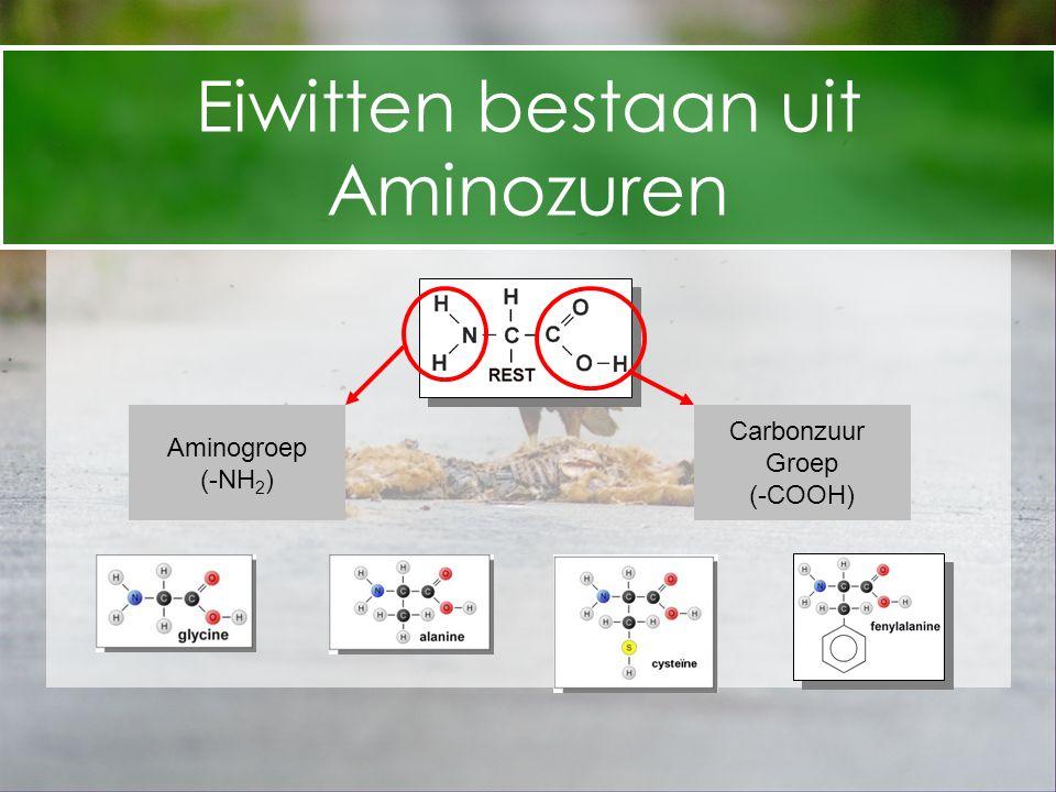 Eiwitten bestaan uit Aminozuren Carbonzuur Aminogroep Groep (-NH2)