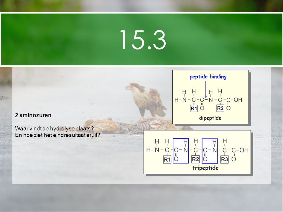 15.3 2 aminozuren Waar vindt de hydrolyse plaats