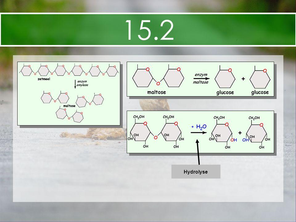 15.2 Hydrolyse