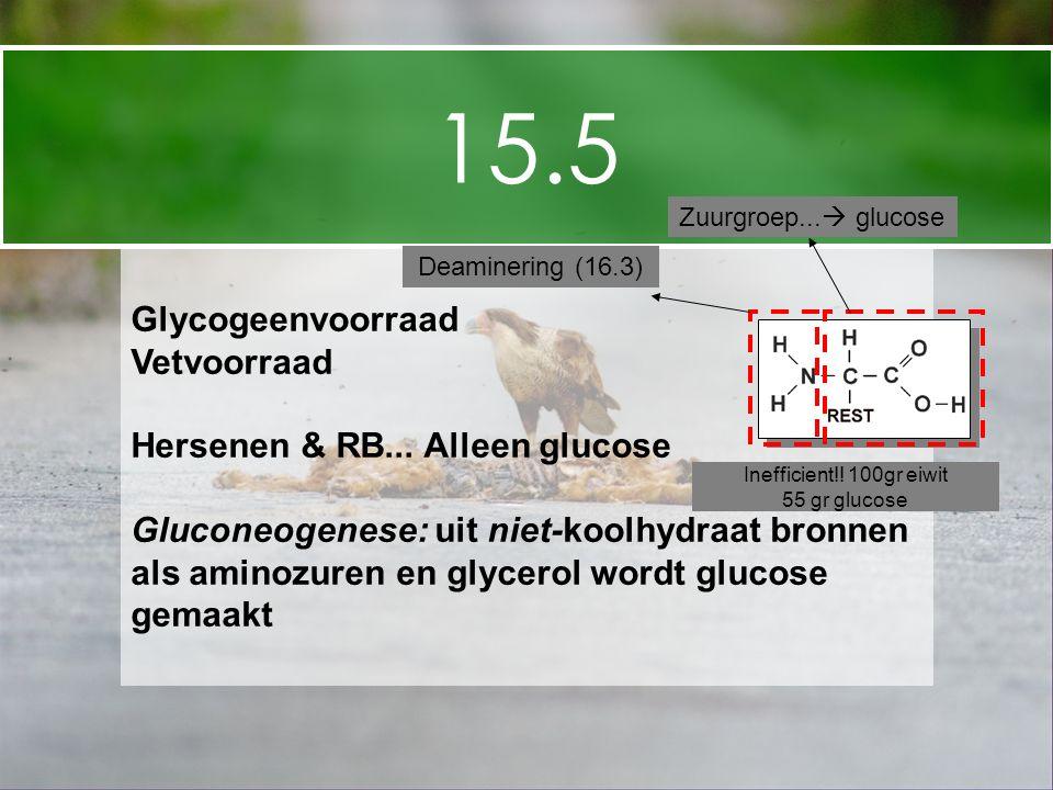 15.5 Glycogeenvoorraad Vetvoorraad Hersenen & RB... Alleen glucose