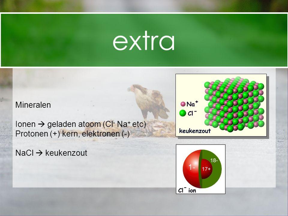 extra Mineralen Ionen  geladen atoom (Cl- Na+ etc)