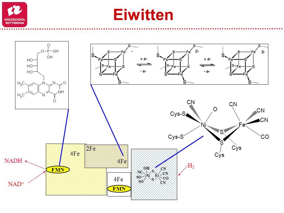 Eiwitten 2Fe 4Fe NADH H2 NAD+ Ni Fe Cys-S Cys O S CN CO FMN S Ni Fe CO