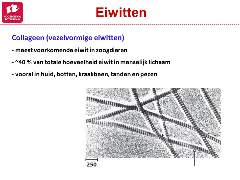 Eiwitten Collageen (vezelvormige eiwitten)