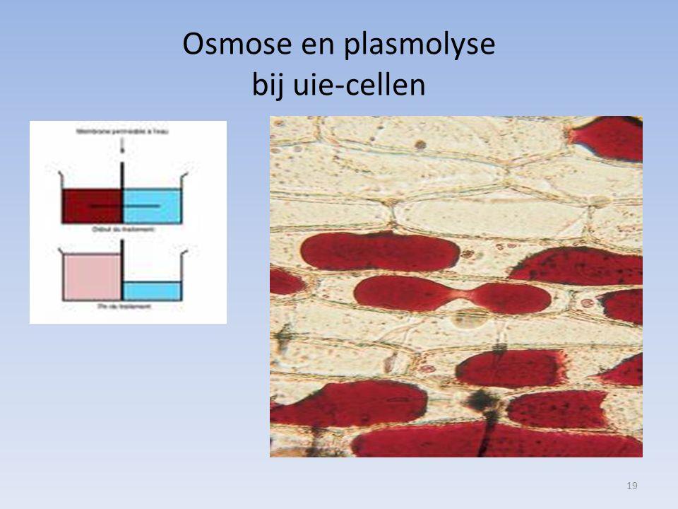 Osmose en plasmolyse bij uie-cellen