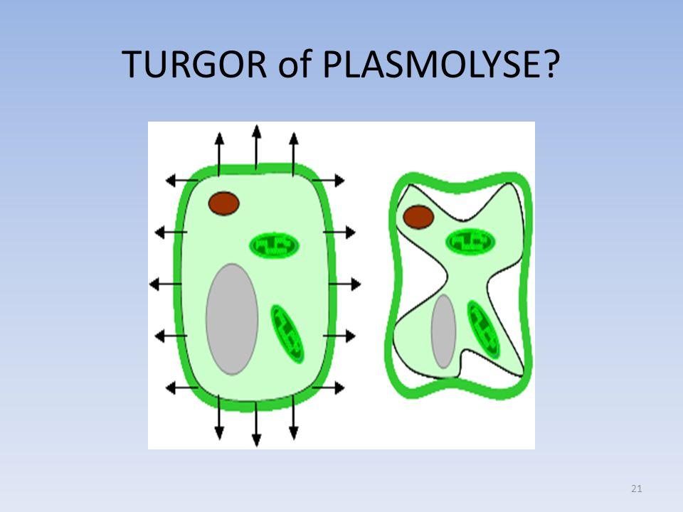 TURGOR of PLASMOLYSE