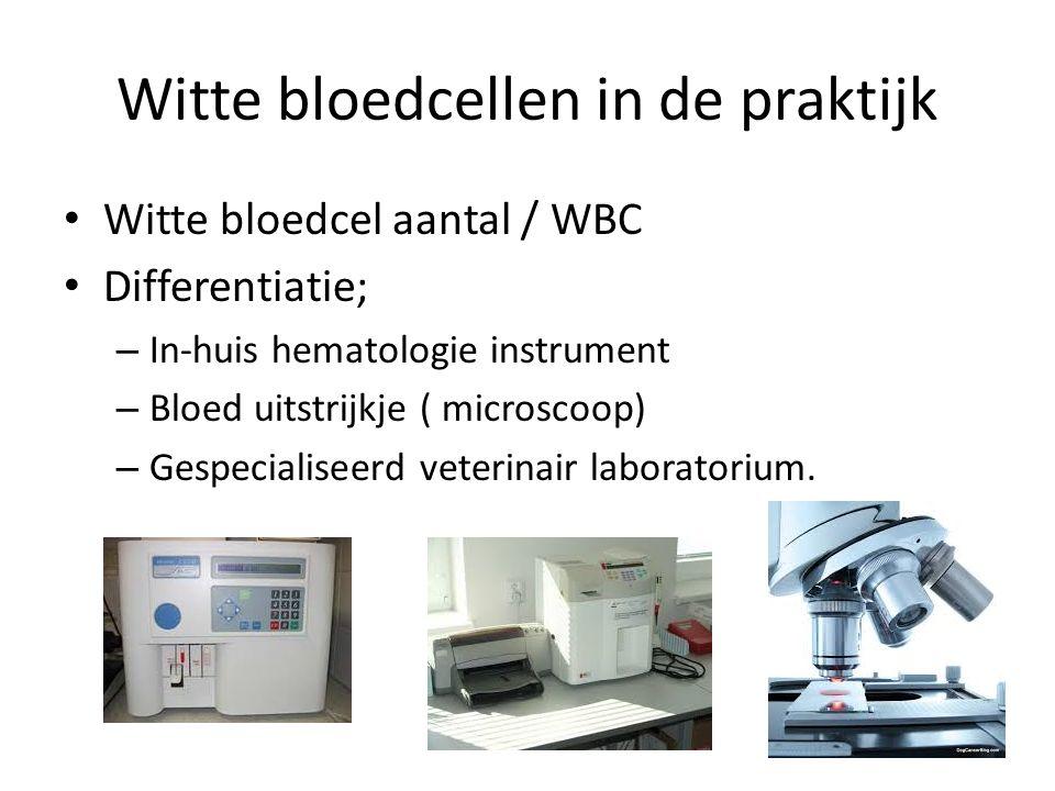 Witte bloedcellen in de praktijk