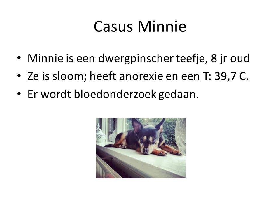Casus Minnie Minnie is een dwergpinscher teefje, 8 jr oud