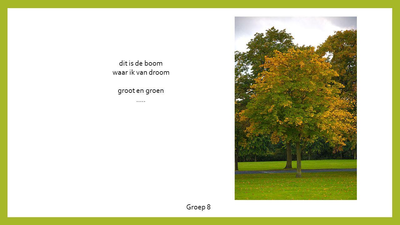dit is de boom waar ik van droom groot en groen ..... Groep 8