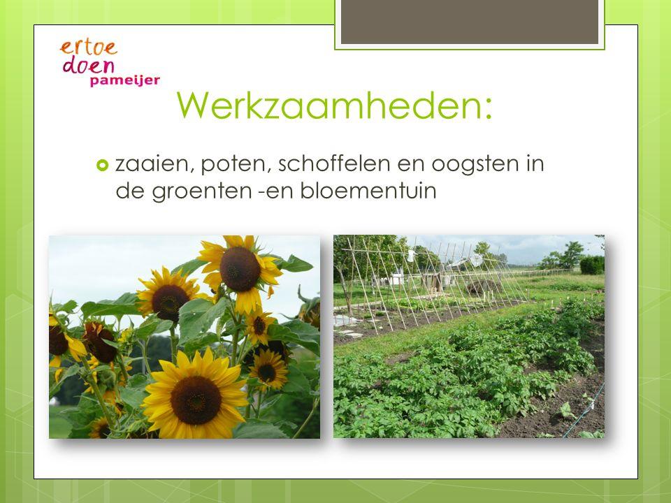 Werkzaamheden: zaaien, poten, schoffelen en oogsten in de groenten -en bloementuin
