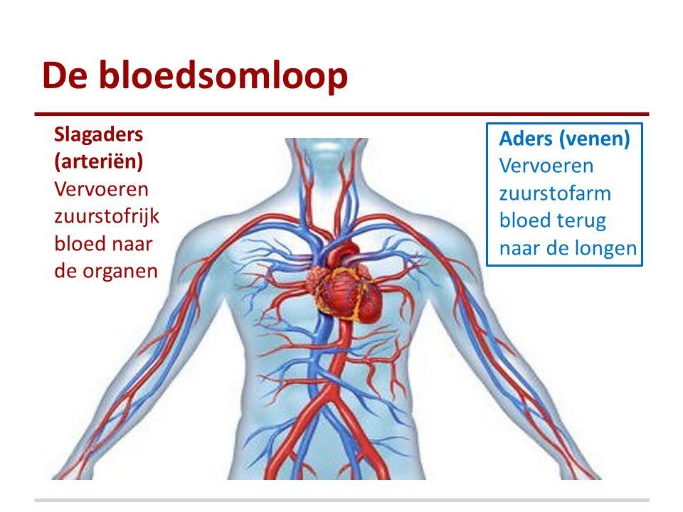 De bloedsomloop Slagaders Aders (venen) (arteriën)