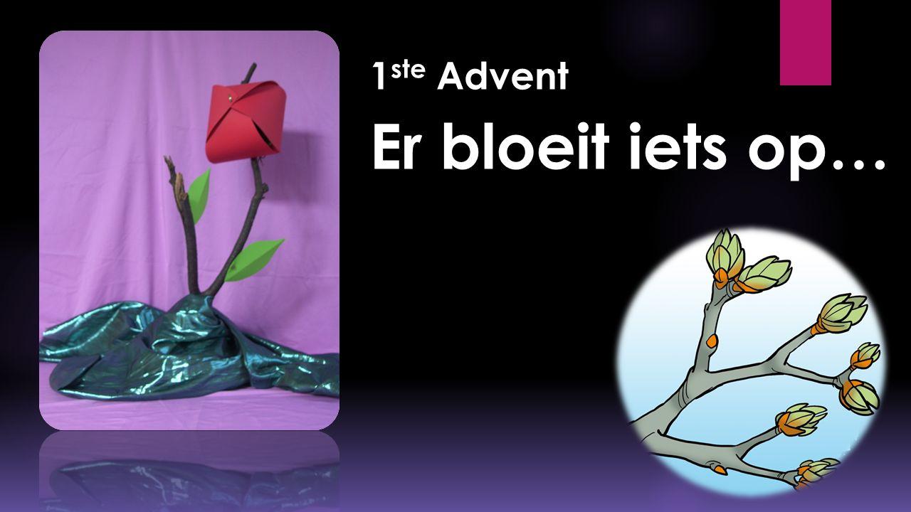 1ste Advent Er bloeit iets op…