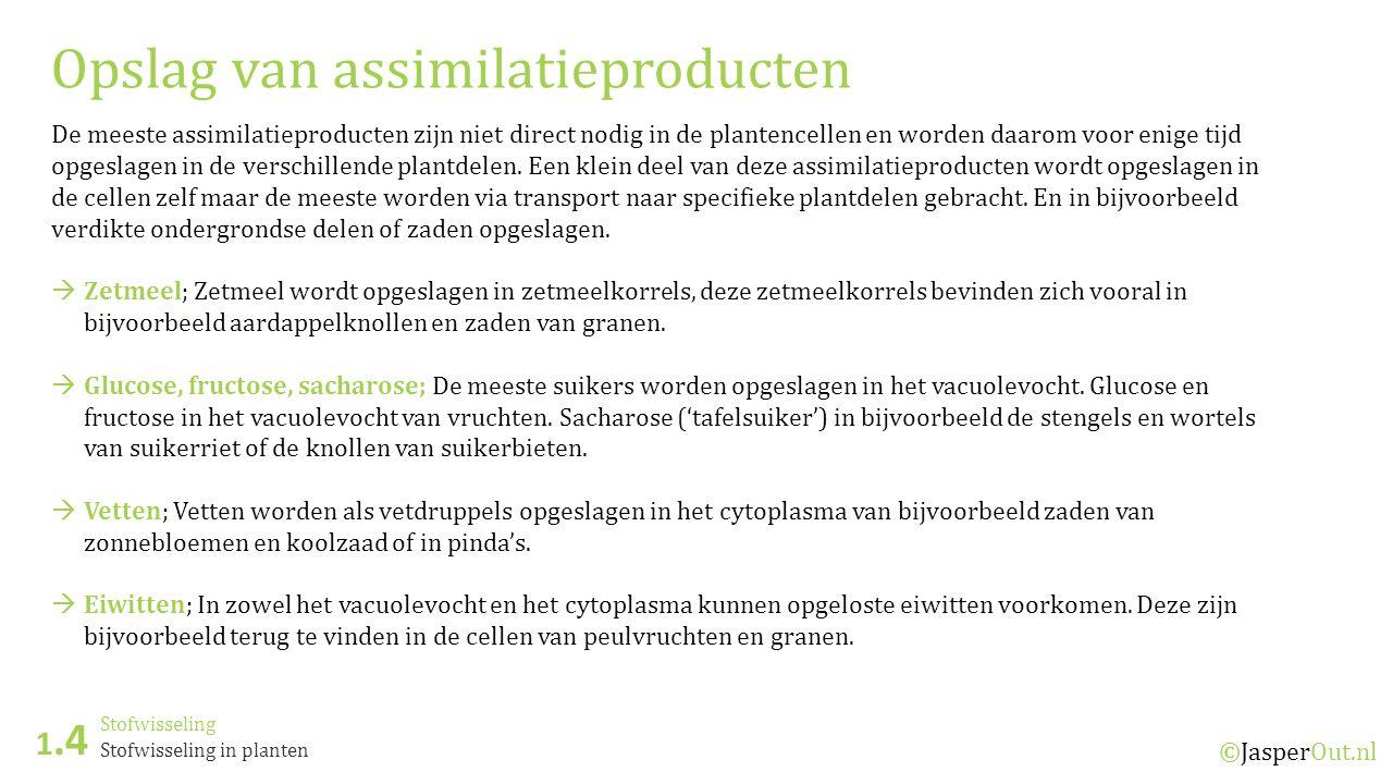 Opslag van assimilatieproducten