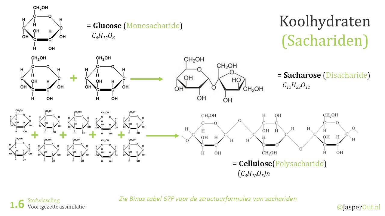 Koolhydraten (Sachariden) + + + + + 1.6 = Glucose (Monosacharide)