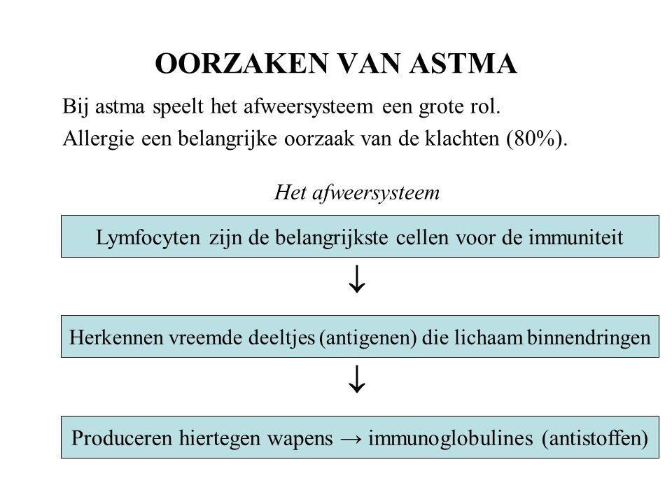 OORZAKEN VAN ASTMA  Bij astma speelt het afweersysteem een grote rol.