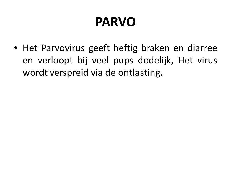 PARVO Het Parvovirus geeft heftig braken en diarree en verloopt bij veel pups dodelijk, Het virus wordt verspreid via de ontlasting.