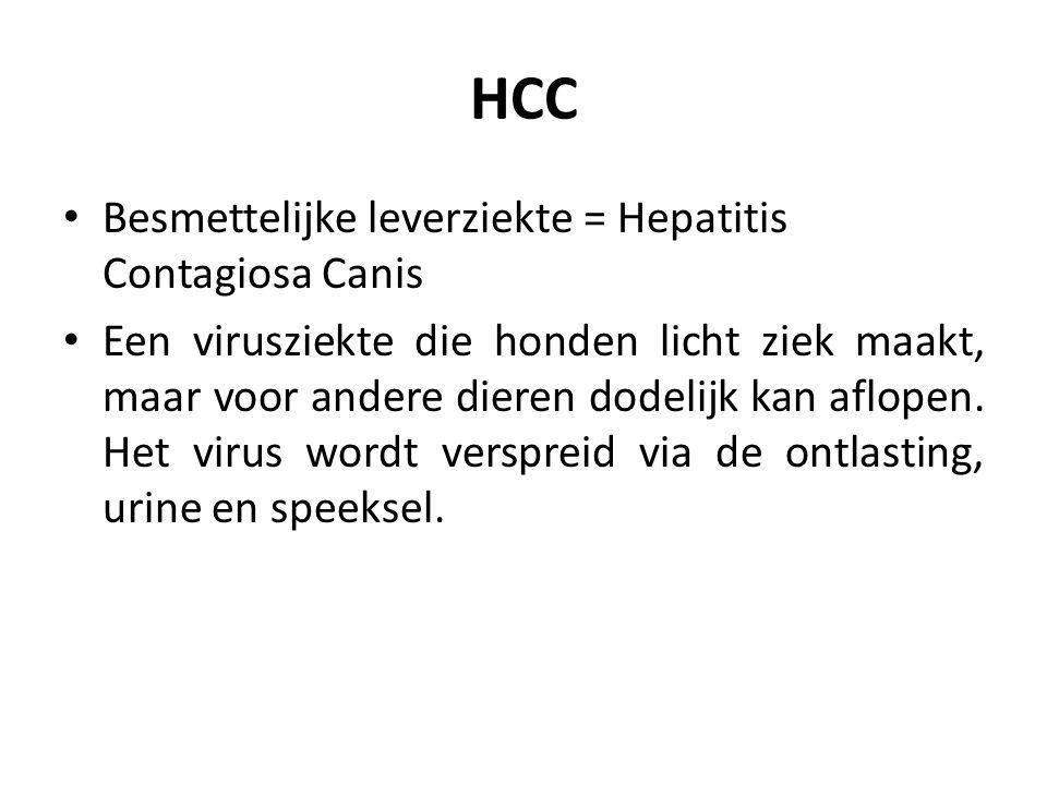 HCC Besmettelijke leverziekte = Hepatitis Contagiosa Canis