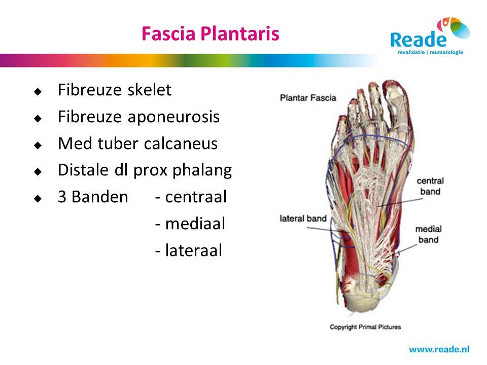 Fascia Plantaris Fibreuze skelet Fibreuze aponeurosis