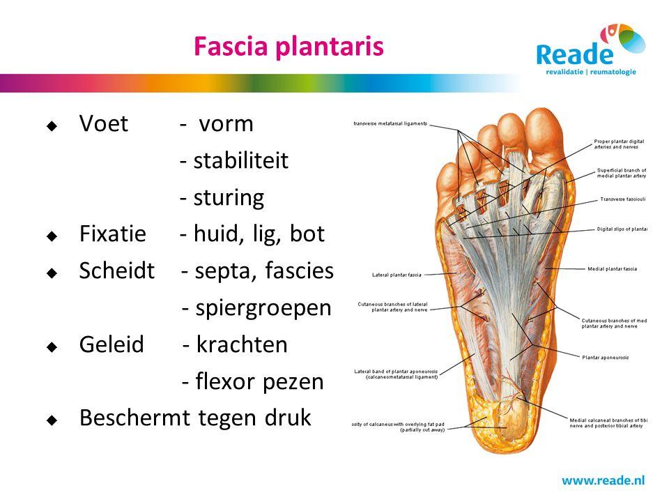 Fascia plantaris Voet - vorm - stabiliteit - sturing