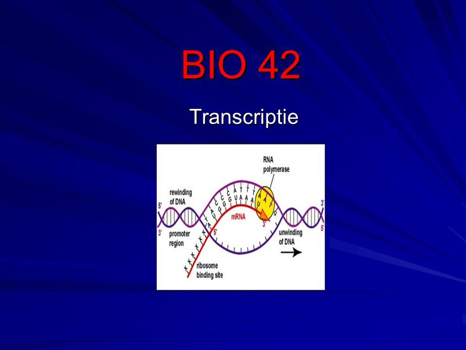 BIO 42 Transcriptie