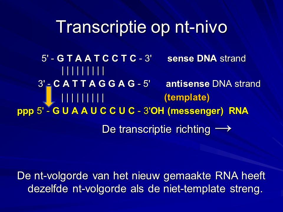 Transcriptie op nt-nivo