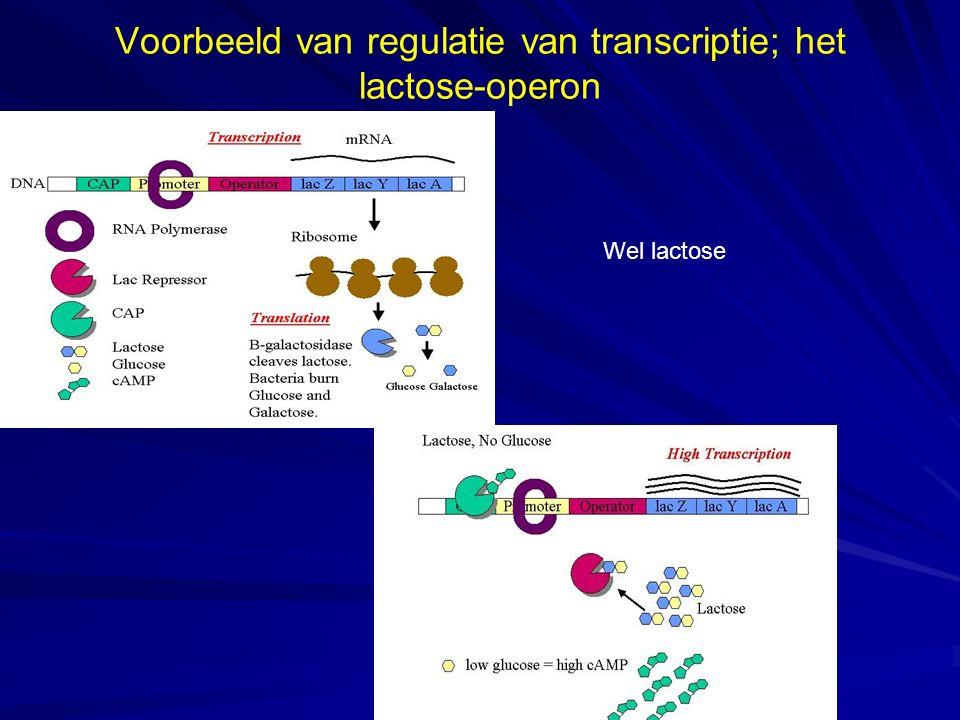 Voorbeeld van regulatie van transcriptie; het lactose-operon