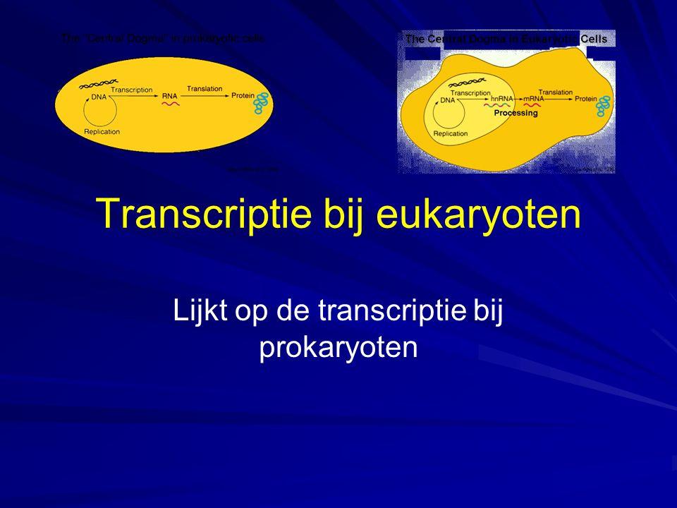 Transcriptie bij eukaryoten