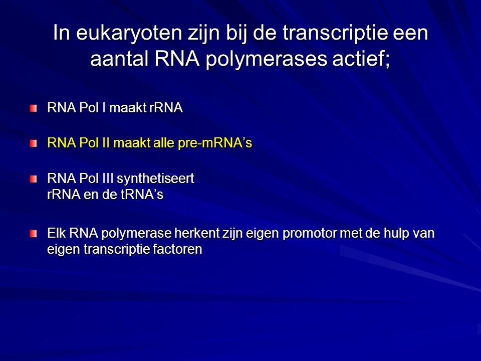 In eukaryoten zijn bij de transcriptie een aantal RNA polymerases actief;