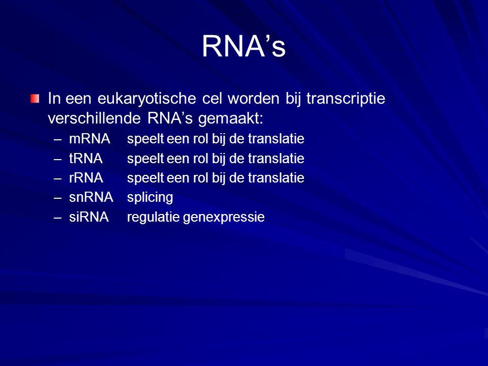 RNA's In een eukaryotische cel worden bij transcriptie verschillende RNA's gemaakt: mRNA speelt een rol bij de translatie.