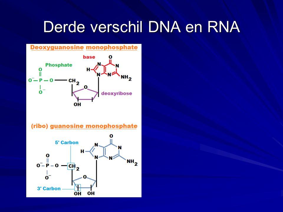 Derde verschil DNA en RNA