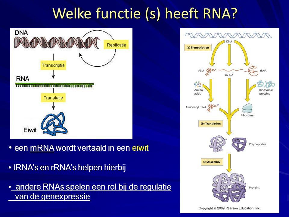 Welke functie (s) heeft RNA