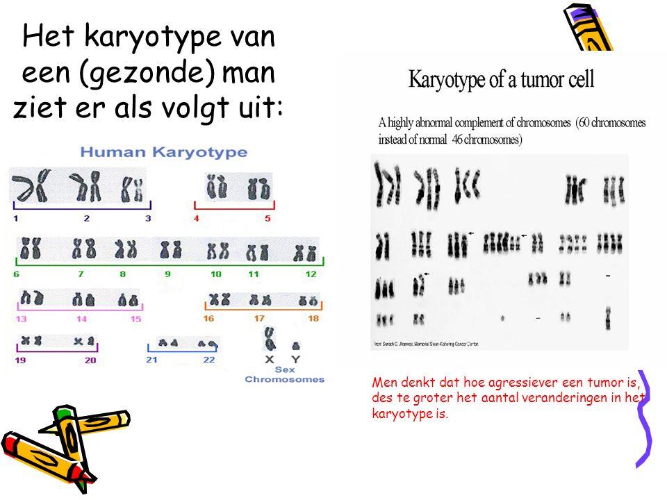 Het karyotype van een (gezonde) man ziet er als volgt uit: