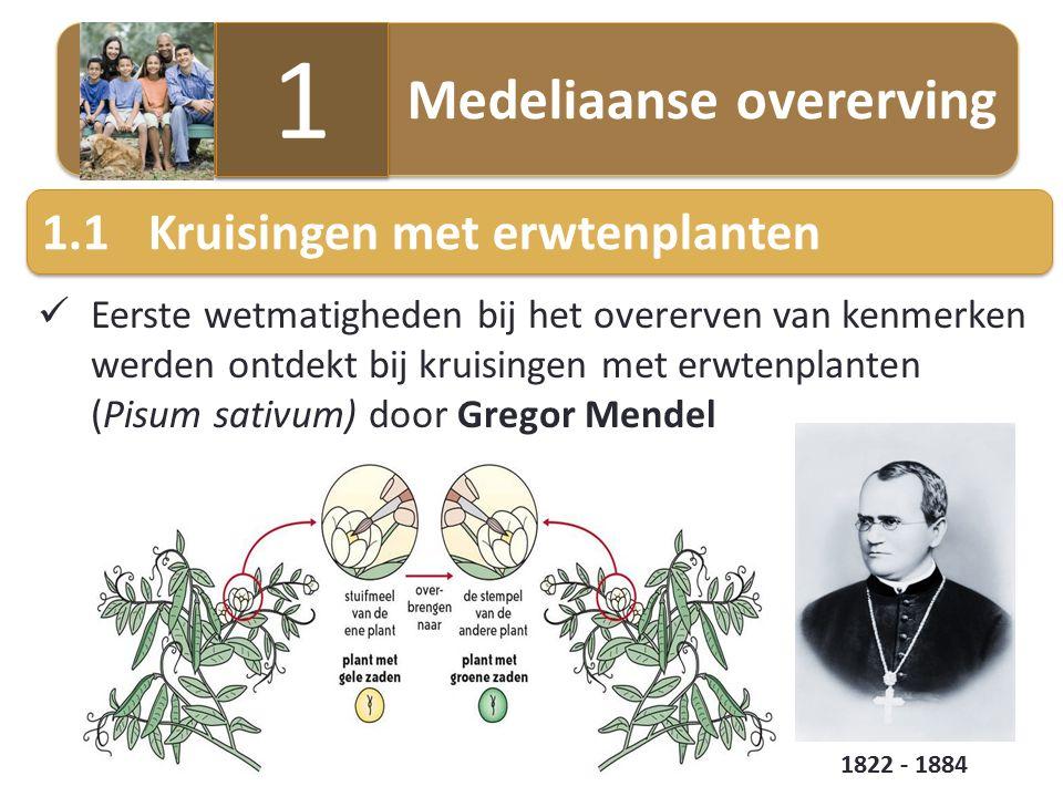 1 1.1 Kruisingen met erwtenplanten Medeliaanse overerving