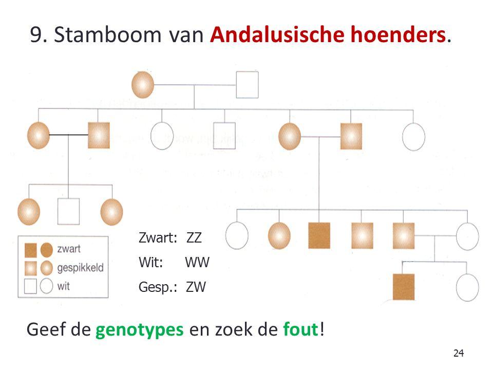 9. Stamboom van Andalusische hoenders.