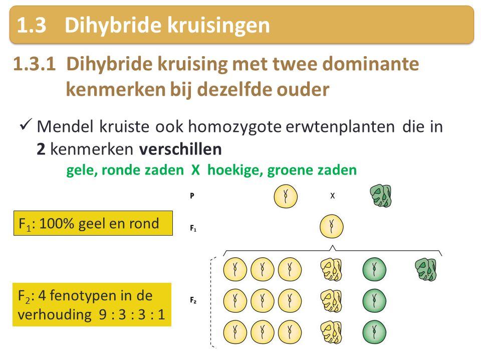 1.3 Dihybride kruisingen 1.3.1 Dihybride kruising met twee dominante kenmerken bij dezelfde ouder.